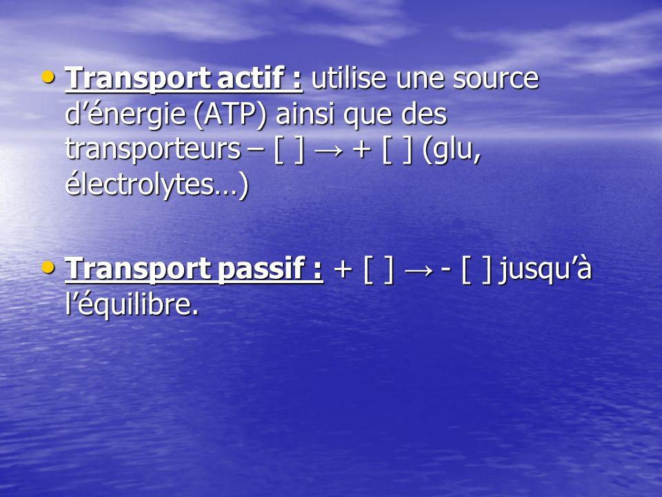 Transport actif : utilise une source d'énergie (ATP) ainsi que des transporteurs – [ ] → + [ ] (glu, électrolytes…)